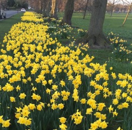 The 5 Best Places to see Spring Flowers in Harrogate