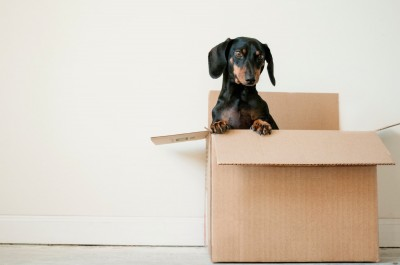 How Landlords Can Adapt to Offer Pet Friendly Rentals
